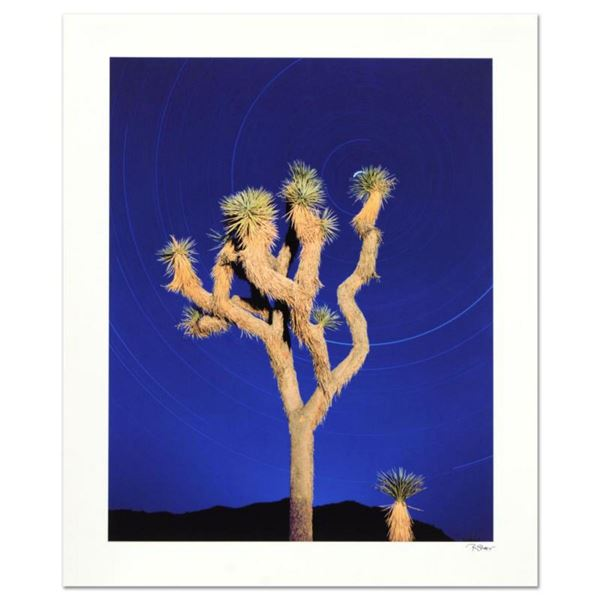 """Robert Sheer, """"Joshua Tree"""" Limited Edition Single Exposure Photograph, Numbered and Hand Signed wit"""