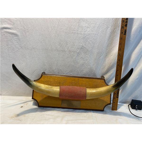 Horn decor