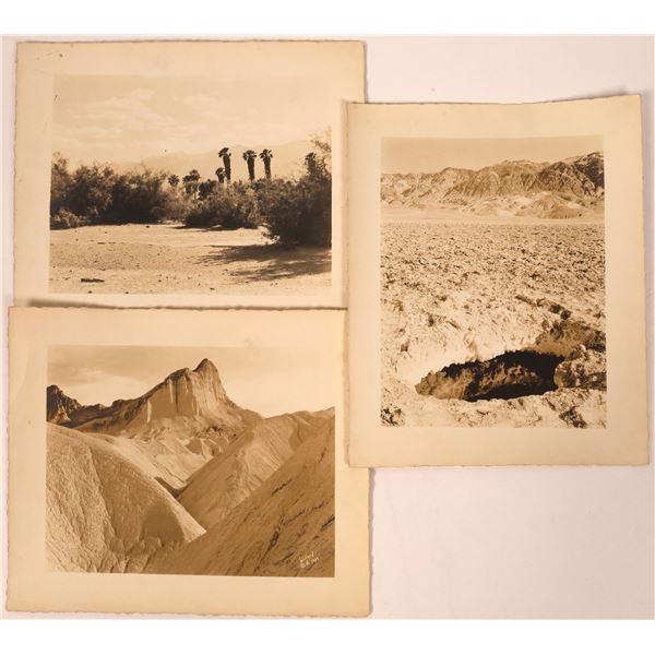 Death Valley and Palm Desert Photographs by Stephen H. Willard  [137983]