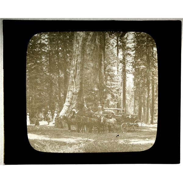 Yosemite Magic Lantern Slide  [137885]
