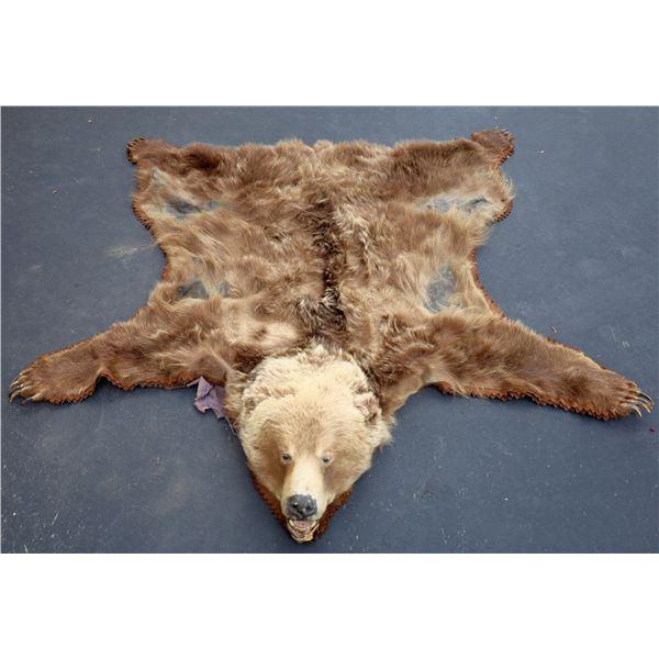 Bear Skin Rug Mount with Full Head  [139683]