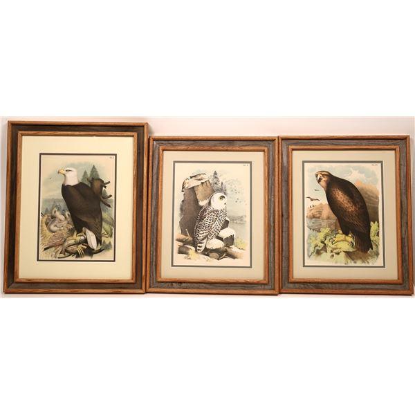 Jacob Studer Ornithology Prints  [139111]