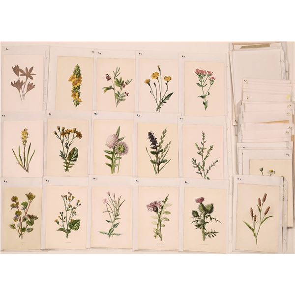 Bird and Flower Prints, Antique  [139931]