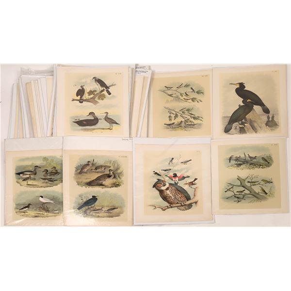 Historic Bird Print Collection  [140057]