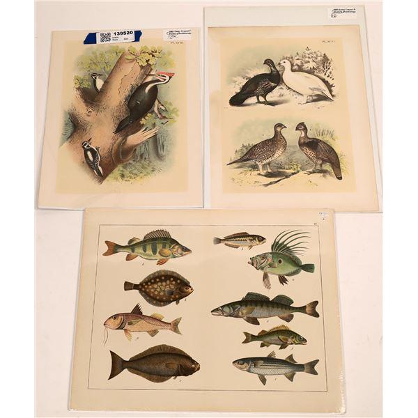 Studer Ornithology and Histiore Naturelle Prints   [139520]