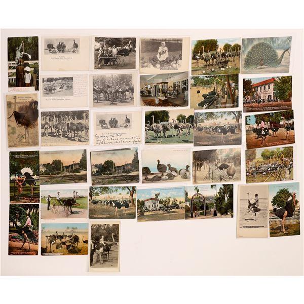 Cawston Ostrich Farm Vintage Post Card Collection (30 pieces)  [138229]