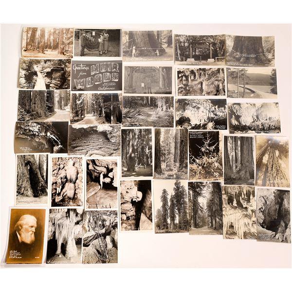 Oregon Caves & Redwood Highway/Muir Woods Vintage Postcards  [138547]