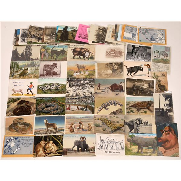 Animal Postcard Collection – Almost 100  [139104]