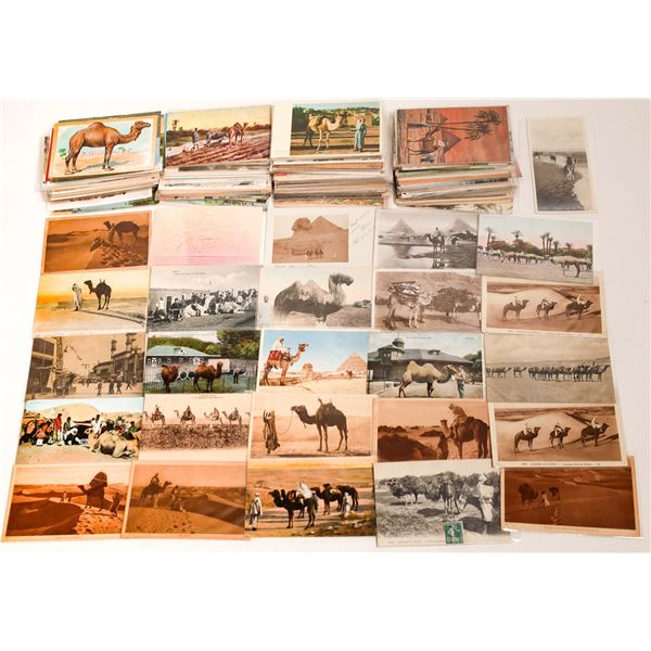 Postcard Collection: Camels  [136225]