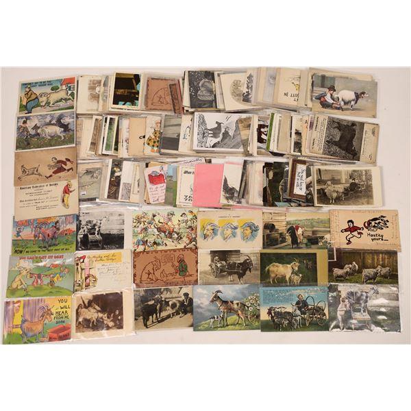 Postcard Collection: Goats...Hundreds of Goats  [136215]