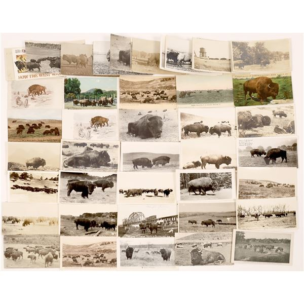 Buffalo Post Card Collection (49)  [139057]