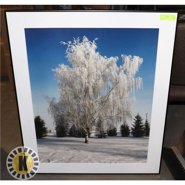 30  X 36  FRAMED PICTURE OF TREE IN WINTER