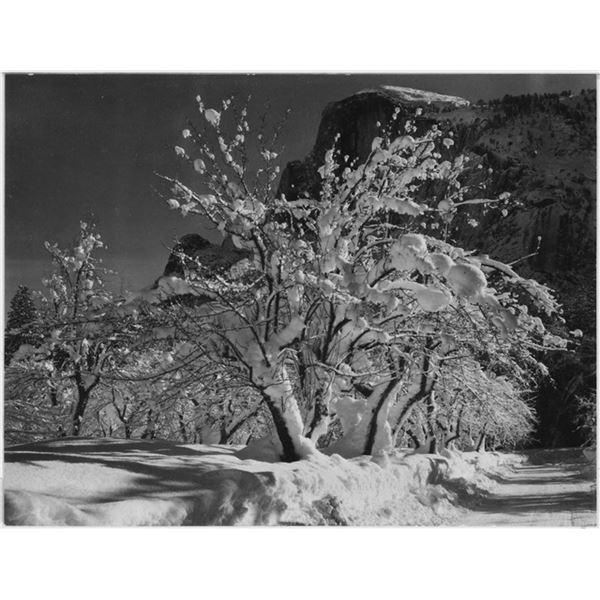 Adams - Half Dome, Apple Orchard, Yosemite