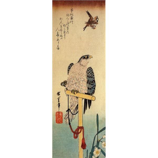 Hiroshig Tied Falcon Eying a Sparrow
