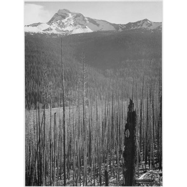 Adams - Glacier National Park Burned Area