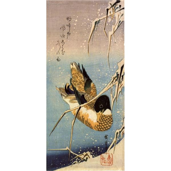 Hiroshig Wild Duck