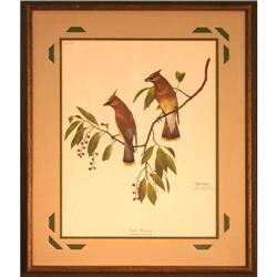 Cedar Waxing, by Ray Harm- Print #2355696