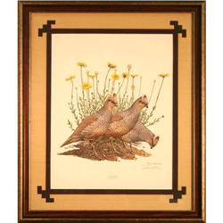 Scaled Quail, by Ray Harm print birds #2355697
