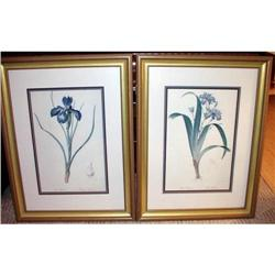 "Vintage Iris Prints Pair 24"" x 32"" Framed Size #2384951"