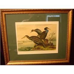 PAIR OF SIGNED BIRD PRINTS,FRAMED AND MATTED #2389656