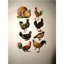 French Rooster Engraving Hand Colored 19th C. #2353716