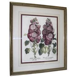 Hortus Eystettensis Botanical Engraving #2381663