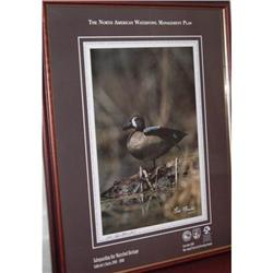 Blue-Winged Teal Duck Framed Lim Edition #2378216