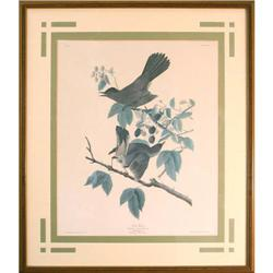 Robert Havell, ?Cat Birds? Bird  Print, #2379638