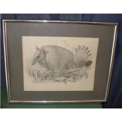 Original Framed & Matted Armadillo Sketch #2379898