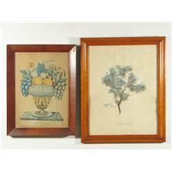 Two 19th Century botanical prints.