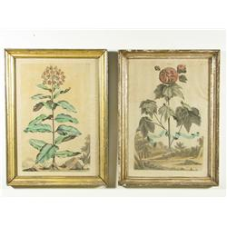 A Pair of Late 18th, Early 19th Century Colored Botanical Prints.