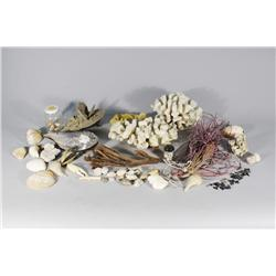 A Collection of Seashells.
