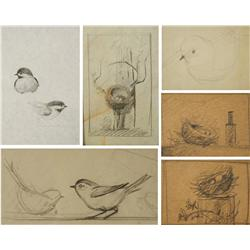 Paul Riba (1912-1977) A Collection of Six Studies Depicting Birds and Their Nests, Graphite on Paper