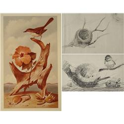 Paul Riba (1912-1977) Two Bird Studies Together with a Photograph of a Paul Riba Painting, Graphite