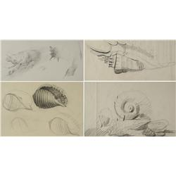 Paul Riba (1912-1977) A Group of Four Shell Studies, Graphite on Paper
