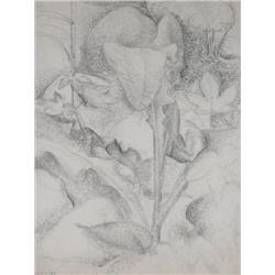 Lionel LeMoine FitzGerald Canadian CGP, G7, MSA [1890-1956]PLANT; 1939pencil on paper14.5 x 11 in. (