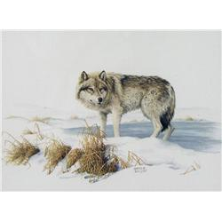Marla Wilson Canadian [b. 1945]WOLF; 1986watercolour on paper8.5 x 11.5 in. (21.6 x 29.2 cm)signed,