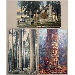 LOT OF 3 EARLY OREGON POSTCARDS - INCL. HUNTING, T