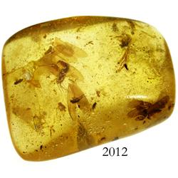 Amber specimen with insects inside from the Dominican Republic.