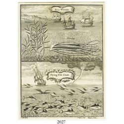 "English engraving, ca. 1750, by I. Basire (London) entitled ""Sea Weeds"" and ""Flying-Fish Chase"" (and"