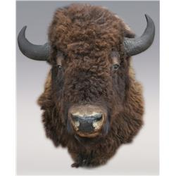 Buffalo Head Shoulder Mount