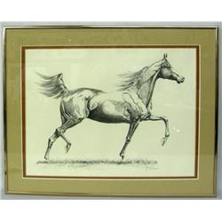 Signed Numbered Arabian Stallion Print By P Moceri