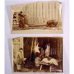 LOT OF 2 VERY EARLY PHOTOS OF FARMERS KILLING HOGS