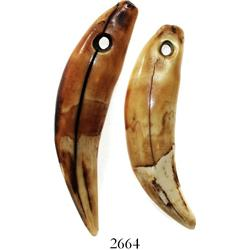Pair of Pleistocene (12,000 to 2.588 million years old) hippopotamus teeth holed in their time for w