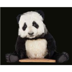 Panda puppet from Knorr commercial for overseas markets