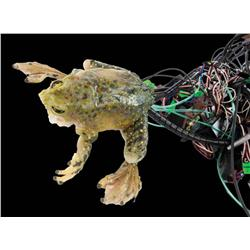 """Screen-used """"Er"""" animatronic frog puppet from Budweiser commercial"""