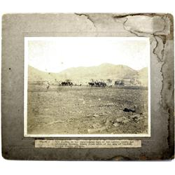 Douglas,AZ - Cochise County - c1907 - Agriculture Photograph :