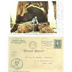 """Amador County,CA - 1905 - Britton & Rey Color Litho Post Card, """"The Woodchopper"""" :"""