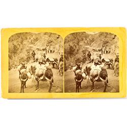 CO - Burro Pack Train Stereoview :