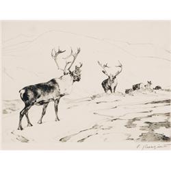 Rungius, Carl - The Stranger (1869-1959)